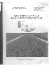 Quy trình sản xuất dứa queen theo VIETGAP